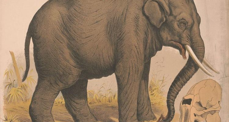 To Shoot an Elephant: Using Literature to understand Perspectives and behaviour